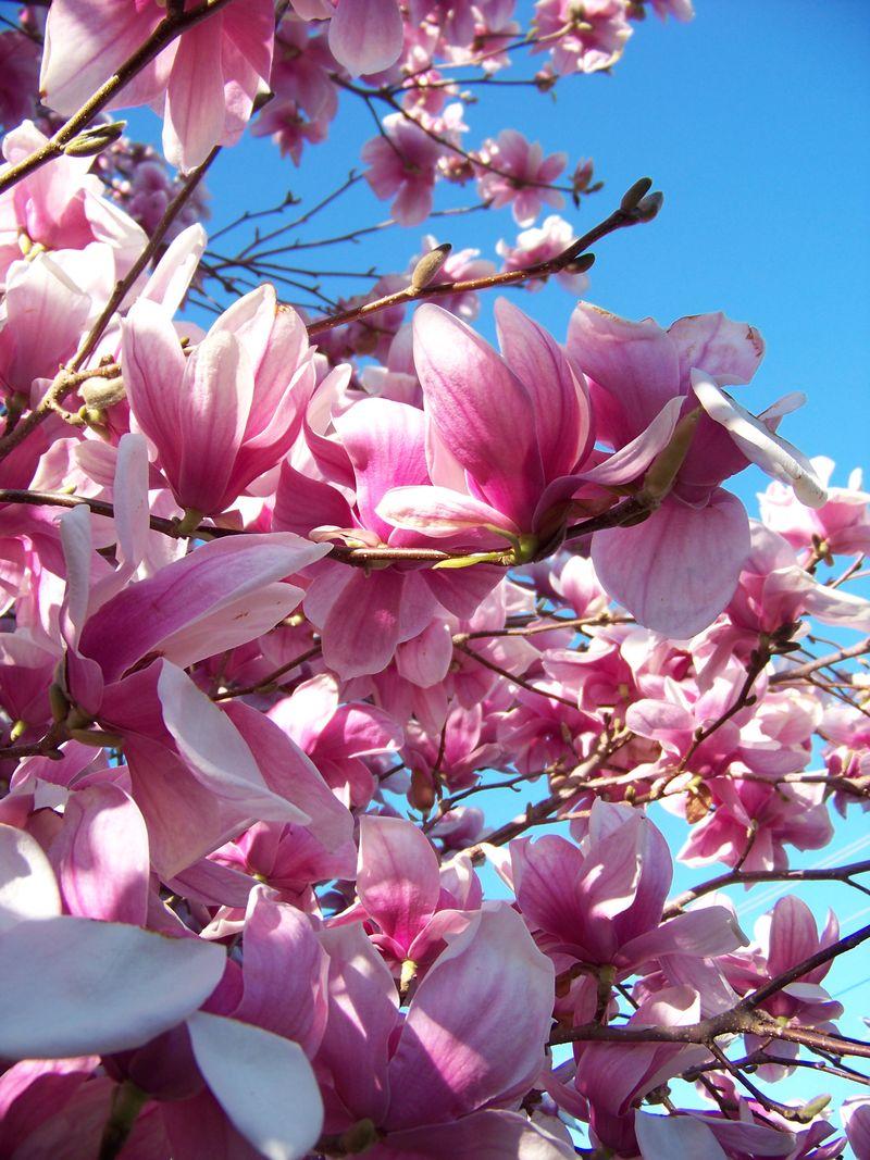 Flowers 044